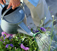 How to Prepare your Garden for Spring